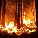 Dan Berlant, Information Officer with CAL FIRE Joins ARNN to Disucss the Yosemite Blaze